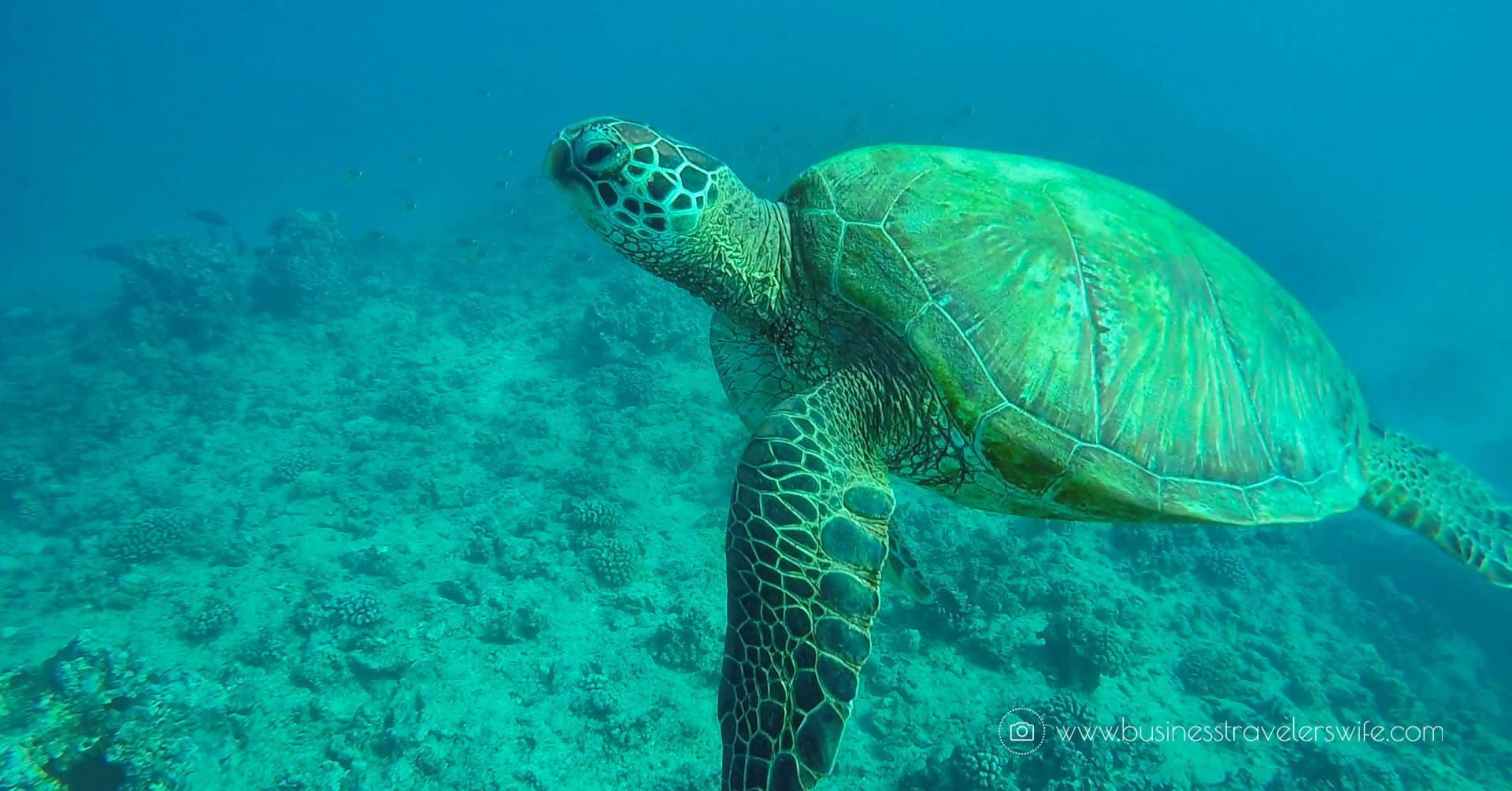 Snorkeling with Hawaiian Green Sea Turtles and Sailing in Honolulu